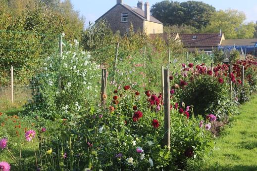 Backyard Flower Farmer : in the garden this September at the flower farm  The Flower Farmer